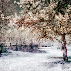Nature-Infrared