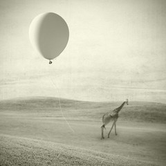 at least she still had her bucket (Janine Graf) Tags: bucket surrealism balloon surreal surrealist giraffe mobilephotography janine1968 iphone4s janinegraf iwonderifeddieredmayneownsabucket ordoeseddieredmaynehavebuckethandlers