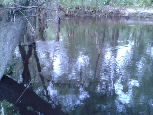 """Withlacoochee River • <a style=""""font-size:0.8em;"""" href=""""http://www.flickr.com/photos/85839940@N03/8655866071/"""" target=""""_blank"""">View on Flickr</a>"""