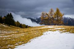 Sentiero dei Cervi (Daniele Pezzoni Photography) Tags: autumn italy mountain alps nature colors leaves foglie landscape italia natura autunno colori alpi montagna lombardia paesaggio