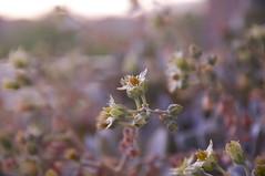 Fleur (Beatriz Abelenda) Tags: plants naturaleza plant flores flower planta primavera nature fleur spring nikon flor blumen printemps frhling