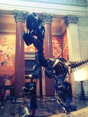 Museo de Historia Natural, INCREÍBLE!!