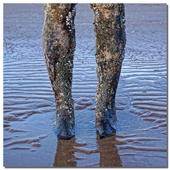 Time and tide wait for no man (hehaden) Tags: sea beach sand legs ironman barnacles crosby antonygormley anotherplace