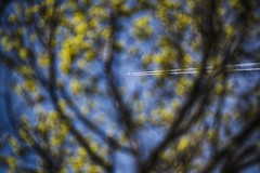 through and through (marco monetti) Tags: sky leaves foglie branches cielo rami scia aeroplano nikkor300mmf45ais nikond600 airplanecontrail