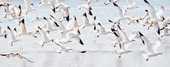 Seagulls (LenaMerk) Tags: light seagulls lake birds