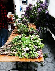 prepping flowers (TheSophisticatedGourmet) Tags: nyc newyorkcity flowers zeiss farmersmarket florist unionsquare prepping zeisslens unionsquaregreenmarket