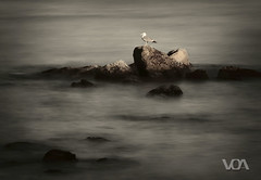 Seagull Paradise (El Orfebre Mochilero) Tags: ocean sunset sea bird water animal rock paradise mediterraneo wildlife seagull