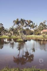 (eduardopavani) Tags: floripa brazil rio brasil lago florianpolis vermelho lagoa pal reflexo pousada coqueiro palmeira riovermelho oceanomare
