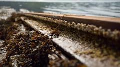 Slipway Rail to the sea.. (35mmMan) Tags: iceland isafjordur dof 50mm nikon d5300 slipway iron rust vanishing point rail barnacles