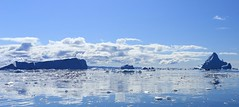 Summer Blues Disko Bay Panorama West Greenland (eriagn) Tags: greenland arctic sea westgreenland diskobay ilulissat jacobshavnicefiord jacobshavnicefjord tabularicebergs blue glacialblue ice icebergs zodiac plane aerial clouds storm glacier glacial summer calm floating seaice cloud cloudformation abstract season seasonal cold frozen window nature weather climate ngairehart ngairelawson eriagn travel photography expedition exploration habitat ecosystem davisstrait panorama glacialiceberg reflections serene beauty quiet silence pristine exploreunexplored