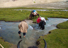 Yaks crossing a river during a treck, Big pamir, Wakhan, Afghanistan (Eric Lafforgue) Tags: adventure afghan afghan268 afghani afghanistan altitude animal badakhshan bigpamir bosgrunniens centralasia colourimage community convoy crossing day grass hike hill horizontal ismaili landscape lifestyles mountain nature oneperson outdoors pamirmountains photography rock scenery scenic tourism transportation traveldestinations treck unrecognizableperson wakhan wakhancorridor wakhi workinganimals yak pamir