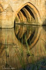 Arch at Radcot Bridge (Da_vina) Tags: arch bridge sunset light reflection river longexposure reeds grass thames riverthames oxfordshire cotswolds radcot radcotbridge