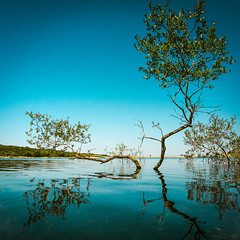 Blue Stillness... (Sylvie.) Tags: blue water tree sonyilce6000 selp1650 portugal represa represadevaledorossim sylviepeeters a6000 sony sky horizon inexplore minimalism nature stillness zen calm relax serene outdoor meer sea europe travel walking lightroom explored