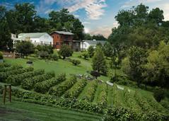 Stone Hill Vineyards (mztery) Tags: scenic missouri vineyards