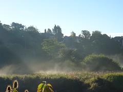 Water meadow mist and sunbeams (Phil Gayton) Tags: sunbeam mist water meadow river dart totnes devon uk