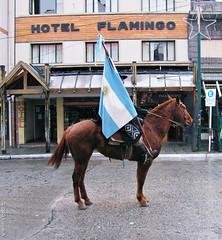 Flag (Ins Luque Aravena) Tags: flag horse caballo bandera lluvia rain argentina bariloche patagonia desfile parade gaucho