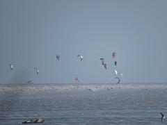 3512 Kite boarders and wind surfers galore (Andy panomaniacanonymous) Tags: 20160816 bbb ccc coast kent kiteboarder kkk littlestoneonsea sea sss windsurfer www