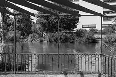 Framed city lake (boettcher.photography) Tags: heidelberg germany deutschland badenwrttemberg august sommer summer 2016 sashahasha boettcherphotography park stadtpark citypark blackwhite schwarzweiss monochrome lake see