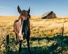 Making Friends (Pedalhead'71) Tags: colfax washington unitedstates us parvin rural horse barn palouse landscape