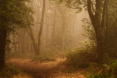 Autumn light (A child in the night) Tags: grain woods walk poem dylanthomas poetry autumn fall years turning light mist morningwalk theedge