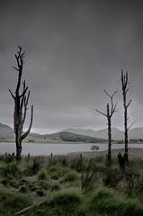 Creepy Corner (Glenn D Reay) Tags: deadtrees snowdon snowdonia wales trees clouds eerie spooky atmospheric lowlight pentaxart pentax k30 sigma1770hsm glennreay llynygader