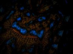 P7281119 (Jeannot Kuenzel) Tags: jeannotkuenzel jeannot kuenzel wwwjk4unet jk4u malta scuba under water underwater diving photography macro supermacro olympus epl5 zen port leica dg macroelmarit 45mm f28 asph ois inon z240 240z ucl165 s2000 moods aliensofthesea aliensofthedeepblue alien deep blue mediterranean sea maltaunderwater maltaunderwatermacro maltaunderwaterphotography bestmaltaunderwaterpictures maltamacro underwaterphotography maltascubadiving supermacrophotography underwatersupermacro underwateralien underwaterworld underwatercreature underwatermacro extrememacro superextrememacro