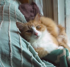 thanks, Jimmy (rootcrop54) Tags: jimmy orange tabby ginger stripes striped macska kedi  koka kissa  kttur kucing gatto  kais kat katt katzen kot  maka maek kitteh chat  sweet boy male cat