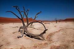 namibia2015-110 (yriis) Tags: namib desert sand immensity uninhabited wildness dune travel 45 red sky blue africa namibia kalahari