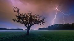 Lightning tree (bmuqa) Tags: 2016 clouds evening green lightening may nature nikon outside sky storm switzerland tree
