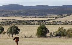 438 Plains Road, Hoskinstown NSW