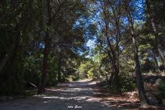 Naturaleza (Jotha Garcia) Tags: tree wood plant naturaleza nature paisaje landscape nikond3200 laplayeta oropesa cvalenciana espaa spain july julio verano summer 2016 jothagarcia