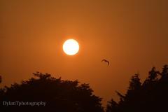 The sunsetting yesterday (dylantobin1) Tags: irish d3200 nikon landscape sunsetting trees pretty photographer photo flickr sun red dublin ireland bird birds sunsets photography