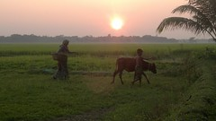 end of the day... (Ayon23x3) Tags: nature sunset bangladesh people bengali