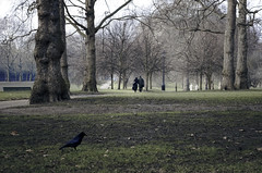 London_DSC01521F (JPPimenta) Tags: the crow park art artistic street photography color garden london