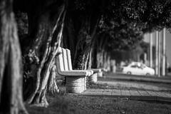 empty bench (alvinpurexphotography) Tags: bench empty khobar corniche ksa streetphotography bw blackwhite