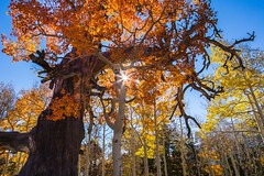 Fall Color in Nevada (Kath's photos) Tags: