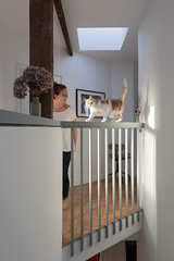 (Daveybot) Tags: stair stairs eyrie alison blipem alimo ali lyra cat sunlight daylight architecture parquet cats railing ballustrade hall landing hallway