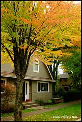 The Early Autumn Colour in Vancouver - Point Grey XT4149e (Harris Hui (in search of light)) Tags: harrishui fujixt1 digitalmirrorlesscamera fuji fujifilm vancouver richmond bc canada vancouverdslrshooter mirrorless fujixambassador xt1 fujixcamera fujixseries fujix fuji23mmf14 fujiprimelens fixedlens fall fallcolor autumn autumncolor pointgrey