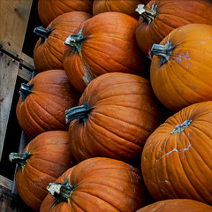 Herd o' pumpkins? (MyArtistSoul) Tags: pumpkins orange stems group bunch food squash halloween pattern texture ribs lines curves angle minimal square 1382 s100