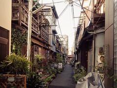 Alley with plants (kasa51) Tags: city building japan digital tokyo alley cityscape olympus backstreet pottedplant omd 月島 f4056 em5 植木鉢 918mm mzuiko 物干場