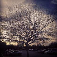 Tree outside Gold's. (David Alan Lux) Tags: trees light sunset sky sun sunlight tree nature sunshine clouds sunrise square landscape day cloudy sunny squareformat sutro mothernature naturelovers iphoneography instagramapp uploaded:by=instagram