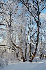 * (Jaan Keinaste) Tags: snow spring estonia pentax lumi eesti kevad k7 harjumaa raevald pentaxk7 jrialevik kevadinelumi