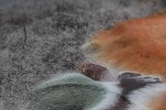 Mold - Castagnaccio (ZenZer0Zer0) Tags: macro lens di reversed latte soia vegano stagne