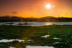 Sunset Palo Verde Nationalpark (naturhighlights) Tags: travel sunset sea orange sun lake plant color green sol reed nature grass season landscape see coast weed flora costarica colorf
