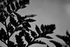 DSC_1195 (Mashael Ahmed _ مشاعل احمد) Tags: flower logo flickr ahmed ورد م مزرعة مصورين ميشوو مصورون مزهرية مشاعل mashael مشاعلاحمد mashaelahmed