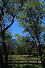 A Pristine Sunday Afternoon (socaltoto11) Tags: california trees mountains landscapes pastures countrylandscapes hartflatcalifornia kerncountycalifornia