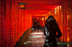 Fushimi Inari taisha walk, Kyoto, Japan / Japn (Lost in Japan, by Miguel Michn) Tags: travel friends light red people amigos beauty japan japanese luces kyoto shrine shadows inari gente camino path religion culture viajes  kioto shinto torii  sombras jinja cultura fushimiinari belleza santuario japons japn fushimiinaritaisha  sunlights  fushimiku sintoismo
