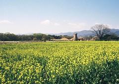Gyeongju, South Korea (nairebrab) Tags: film 35mm southkorea gyeongju minoltahimatic cheomseongdae filmfilmforever