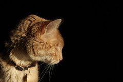 Handsomeness (wee3beasties) Tags: cat blind chiaroscuro toothless eyeless blindcat sooc eyelesscat toothlesscat