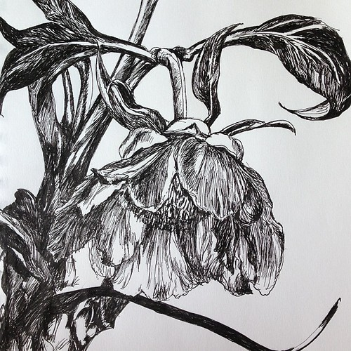 "#tree #peony #blossom #sketch #uniball #micro #vision #pen #drawing • <a style=""font-size:0.8em;"" href=""https://www.flickr.com/photos/61640076@N04/8683958345/"" target=""_blank"">View on Flickr</a>"